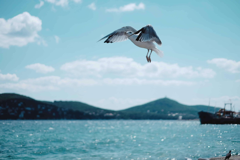 Turecko kam na dovolenou